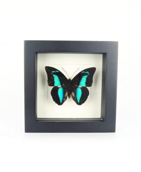 Vlinder in lijst blauw groen klein