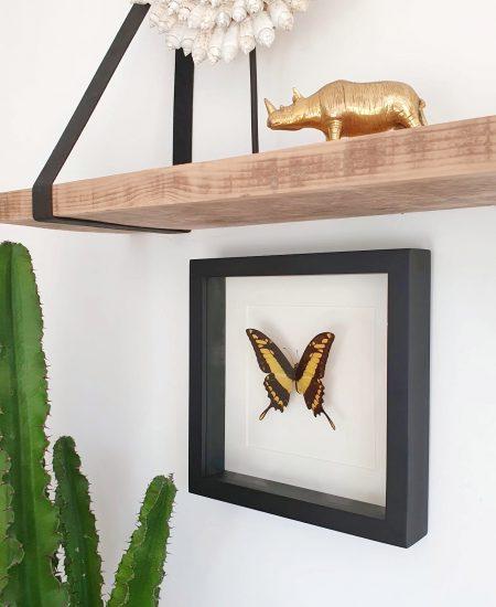 Vlinder in lijst geel