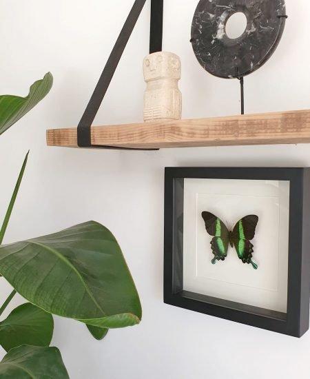 Vlinder in lijst groen