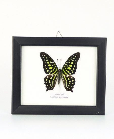Vlinder in lijst klein groen