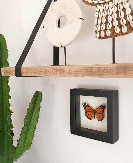 Vlinder in lijst klein oranje