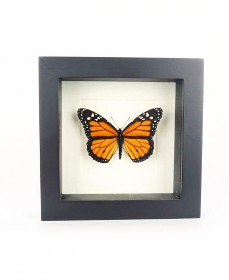 Vlinder in lijst oranje klein