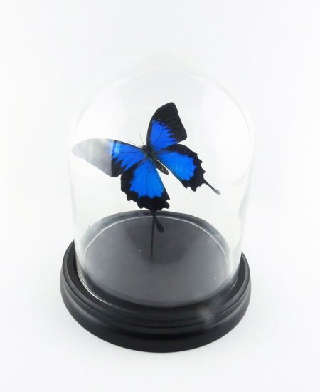 Vlinder in stolp blauw vlinderstolp