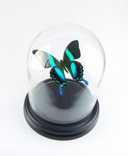 Vlinder in stolp groen vlinderstolp bovenkant