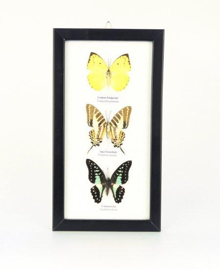 Vlinders in lijst 3x